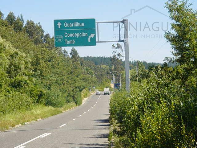 Venta de gran terreno en Guariligue Alto comuna de Coelemu.